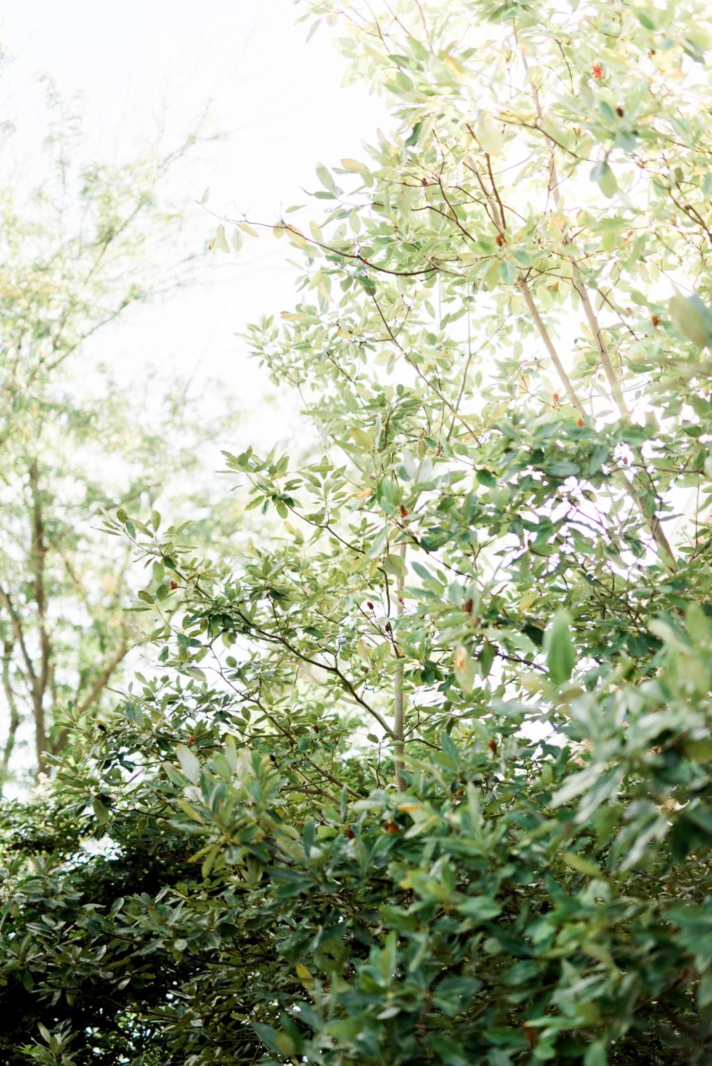 haley-richter-photography-buena-vista-confrence-center-wedding-summer-122