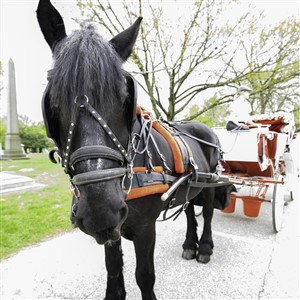 Horse Drawn Carriage at Kentucky Derby Party West Laurel Hill Cemetary