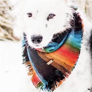 Pup with Multicolor Adventure Bandana