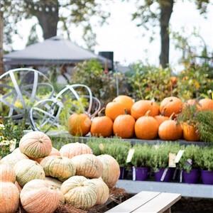 Terrain Autumn Bounty Festival